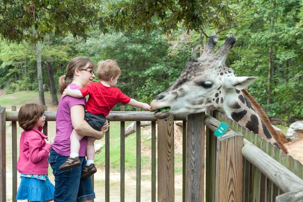 Quels Zoos visités pour divertir vos enfants ?